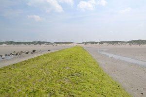 Westende golfbreker strand